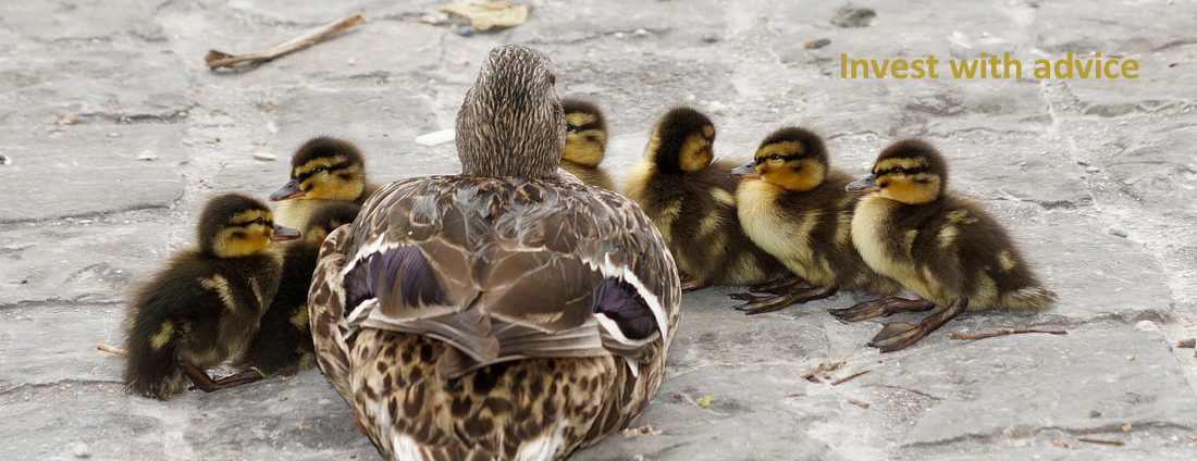 mother and baby ducks with resource heading